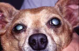 Chirurgie Vétérinaire Snof